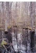 Typical Vernal Pool
